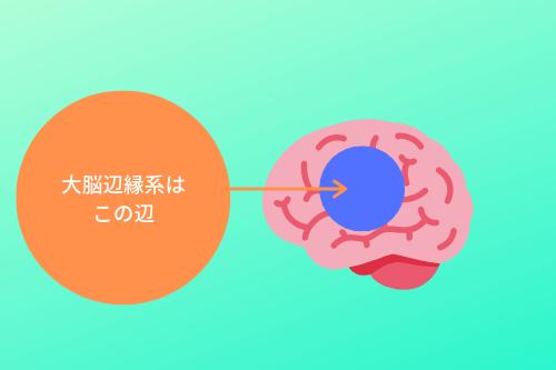 大脳辺縁系の大体の場所