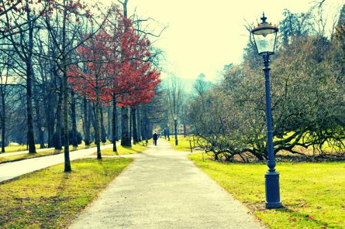 緑のある公園