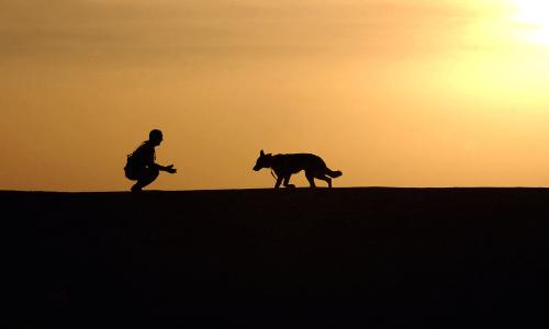 捨て犬を助ける人